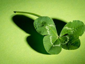Vierblättriges Glückskleeblatt