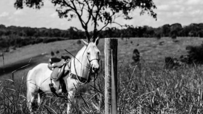Reiterloses Pferd mit Sattel