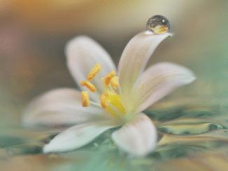 Blüte als Symbol für die Schönheit der Seele