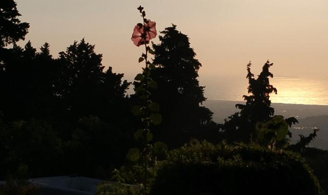 Blume in der Abendsonne